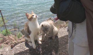 沖島は猫の島
